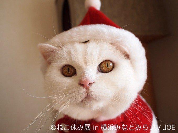 猫 画像 cat image 「ねこ休み展」横浜で合同写真・物販展初開催、癒し写真から願いが書ける猫の「巨大絵馬」まで登場 -