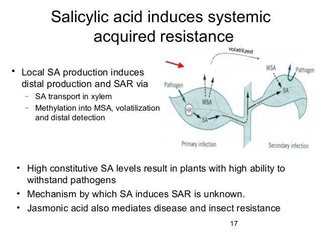 salicylic acid svenska