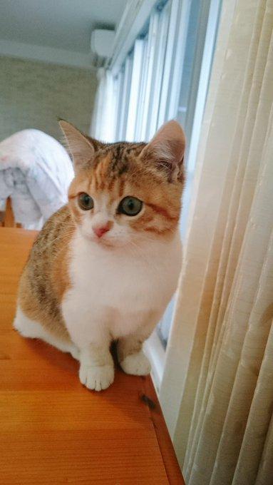 猫 画像 cat image 昨夜は温暖な広島でも雪が降り、凍えるような寒さでした⛄ 車で出られる方はボンネットをバンバン?コンコン?して猫が入りこんでいないか見てくださいね?ほんのひと手間で救える命があります?