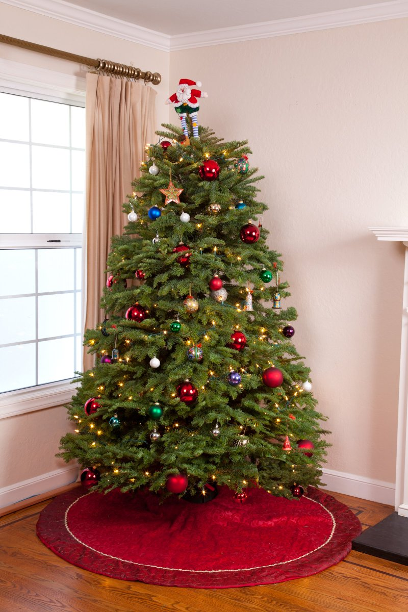 green valley trees on twitter get one of our finest christmas trees the noble fir this blue green beauty has very strong evenly spaced branches ideal