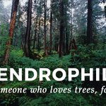 Image for the Tweet beginning: Are you a dendrophile? 🌳