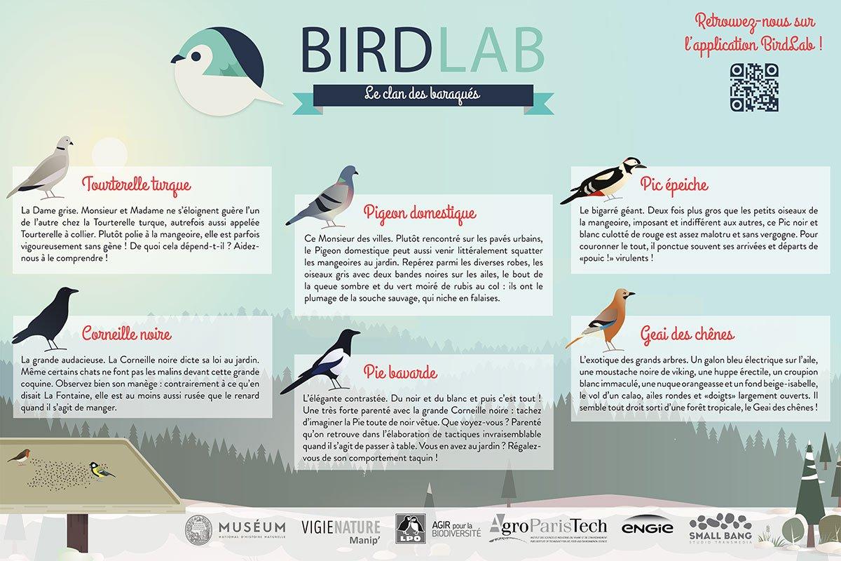 69b6ba8c96f6 Apprenez à reconnaître les  oiseaux qui fréquentent les mangeoires de votre   jardin grâce aux posters de BirdLab à télécharger en PDF ...