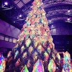 サントリーホール前のクリスマスツリーはここ数年このタイプのようだけど、今年は特に綺麗な気がする〜。 …