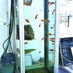金魚の電話ボックス見に行ったんですが、人類が滅んだ後に水没した都市を、何も知らない金魚が優雅に泳いで…