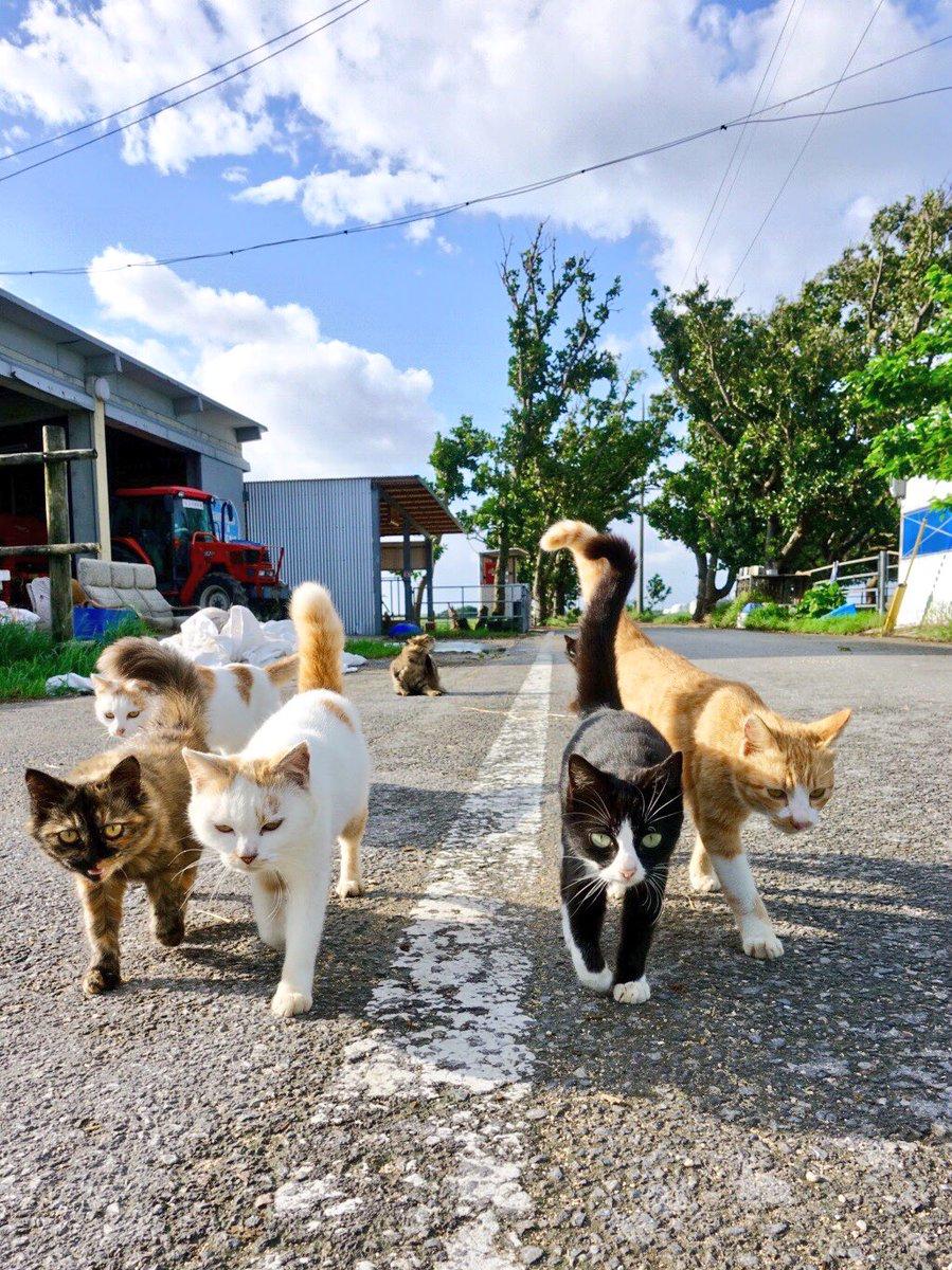 どんどん猫が迫ってくる〜!可愛すぎる集団に胸キュンが止まらない写真!
