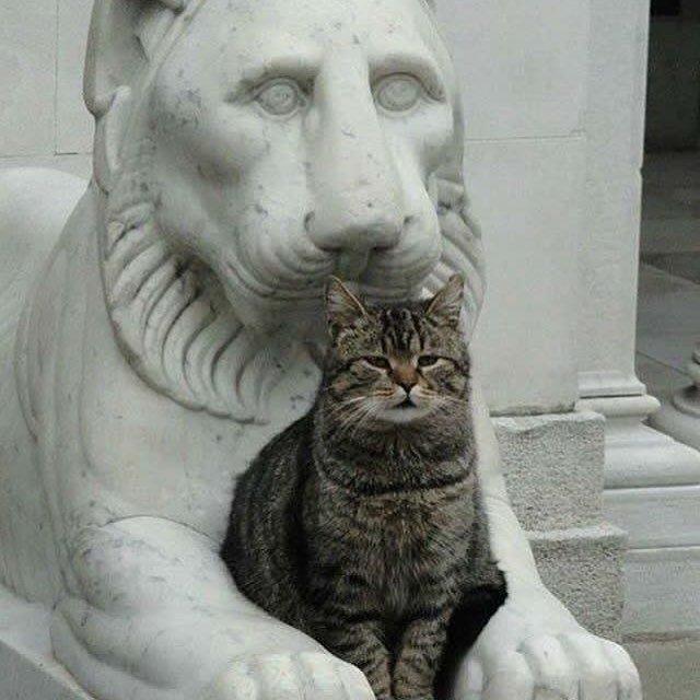 石像と猫。