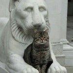 石像と猫。 pic.twitter.com/tKpfQTRgUi