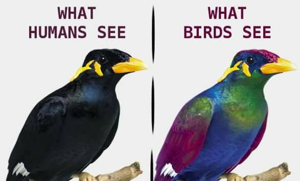 Animal Cognition On Twitter Birds See More Colors Than Humans In Several Ways Read More At The Avian Conservation Education Network Https T Co E13kvmaiif Https T Co Fbgfhh4icv