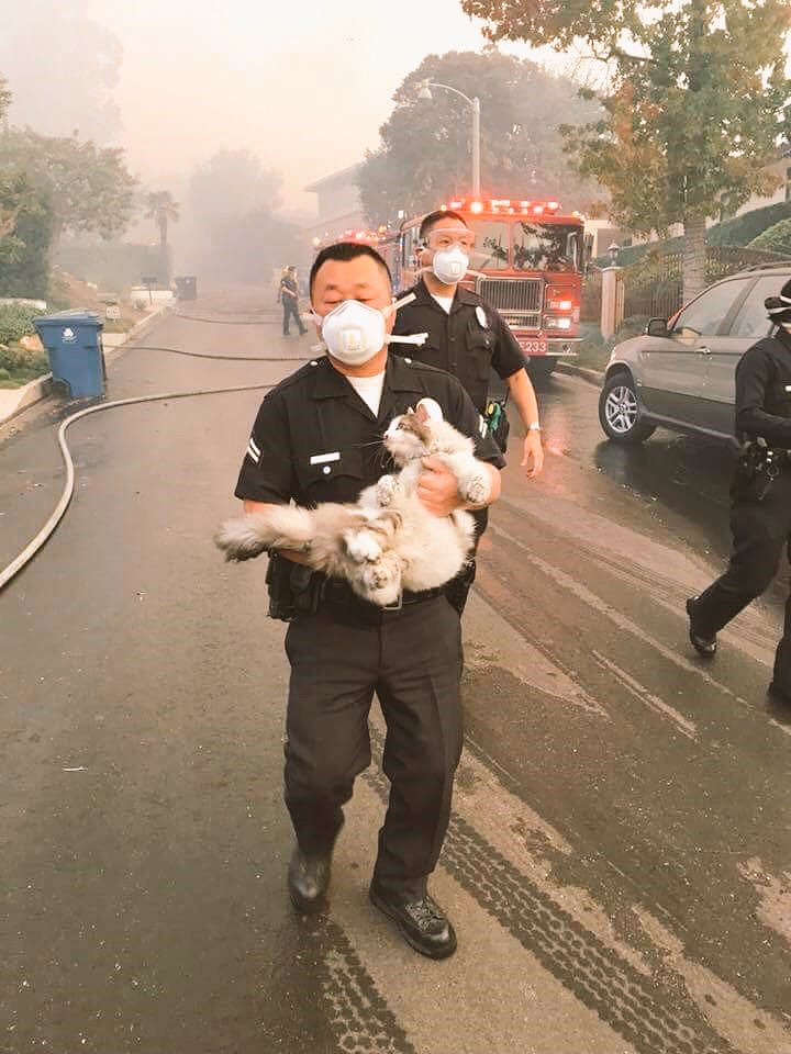 Police Officer Rescues Cat From Fire