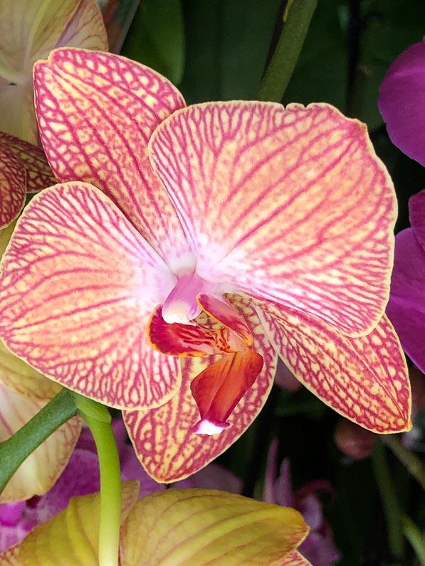 orchidee vanda bluht nicht mehr