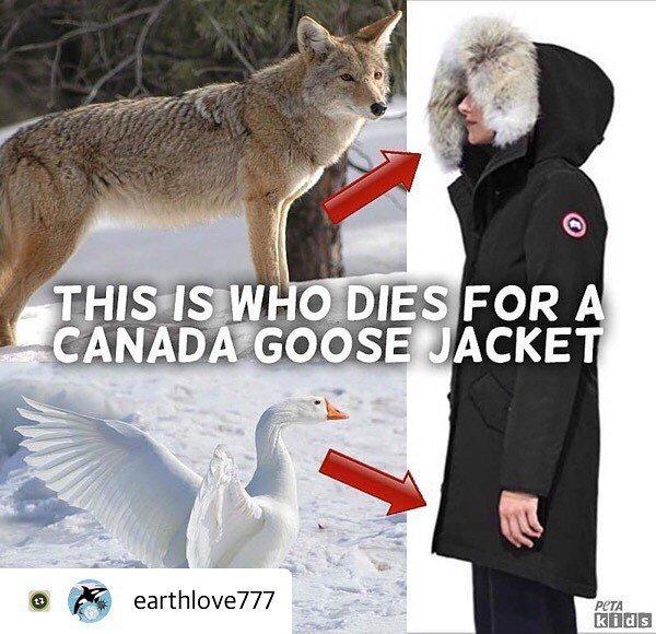 canada goose fur made of