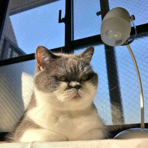 「落としのじろう」の異名で知られてそう?  ハードボイルドな猫ちゃんがかっこいい 犯人を取調中の熟年…