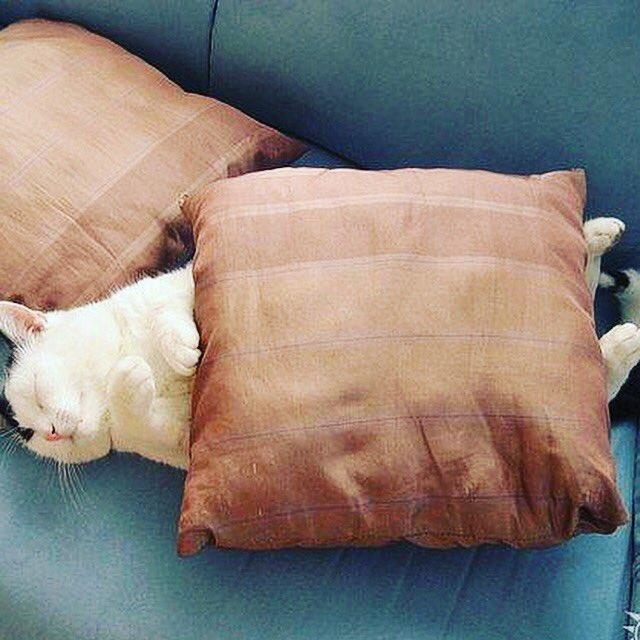 статье картинки про любителей поспать отклонения можете узнать