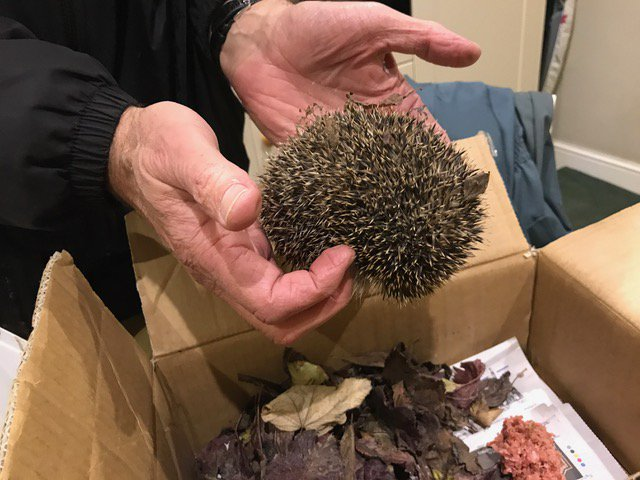 test Twitter Media - Baby hedgehog was found outside Eradipest headquarters last night. Glad @brentlodge will keep it cosy & fed over winter. #hedgehogs below 400gms will not always survive the cold months without help. Little one was transferred in a cardboard box with food and water #ChichesterHour https://t.co/lIKooovZoc