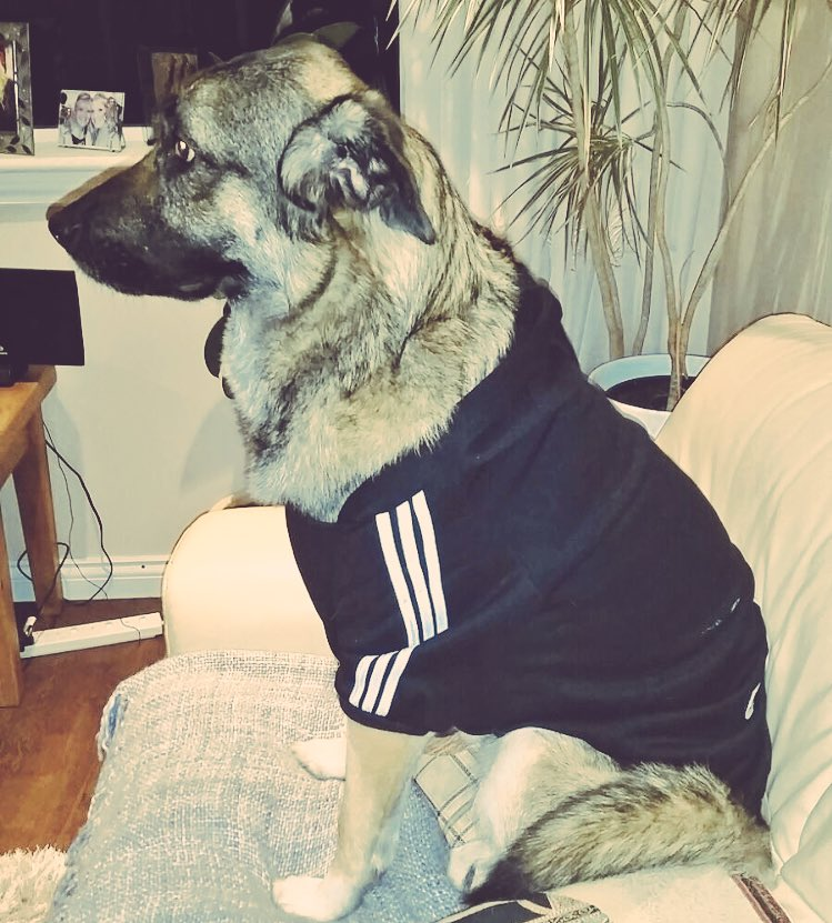 Adidas Uk On Twitter New Idea Adidas Clothes For Dogs