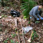 REU in Tropical Ecology and Evolution, Puerto Rico - summer 2018 - Now accepting applications!  Please help us spread the word. Application deadline February 15, 2018. Details in: https://t.co/5FhNaWwEwk