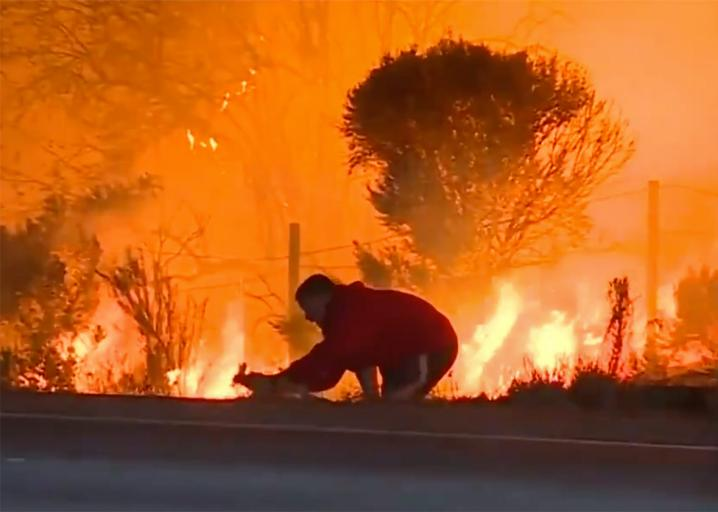 Down the rabbit hole - leftists triggered over video saving wild rabbit in L.A. wildfires