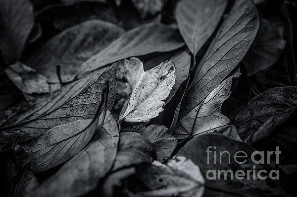 "RT @RCNaturephotos: Beautiful moody monochrome! - ""Leaves in Darkness"" - https://t.co/Mid2vf6FqI  https://t.co/KpFIewfudy #leaves #autumn #…"