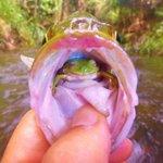 釣った魚の中にカエルが入っていた!カエルは安堵の表情を浮かべる!