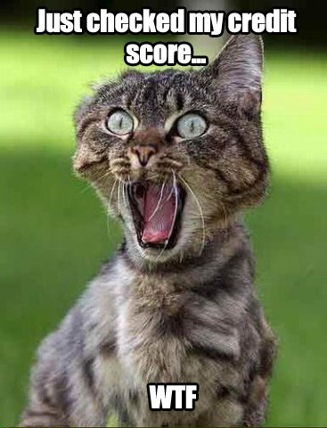 DQf8MBXVAAA5I_5 catmeme hashtag on twitter,Get Down Cat Meme