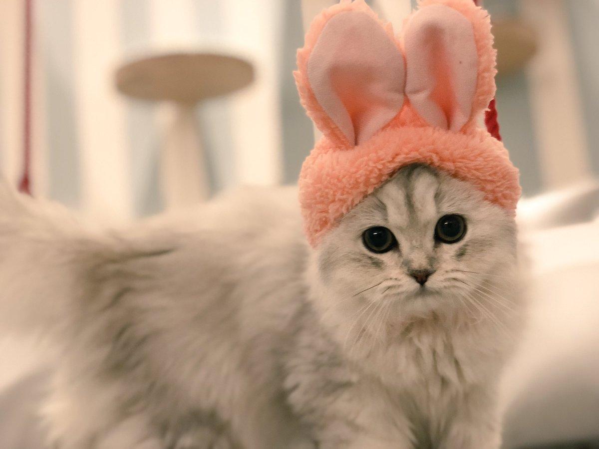 #猫うさぎ - Twitter Search