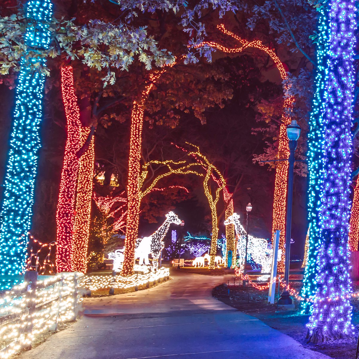 Wild Lights at the Detroit Zoo photo courtesy Jessica Strachan