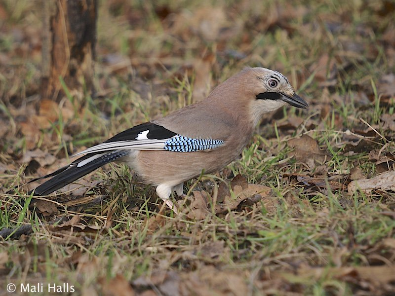 #Jay...We&#39;ve been out for a #nice #drink at our #local, I wish you all a very #happy #weekend, have #fun, be #kind to everyone.<br>http://pic.twitter.com/kgGQylVbg4