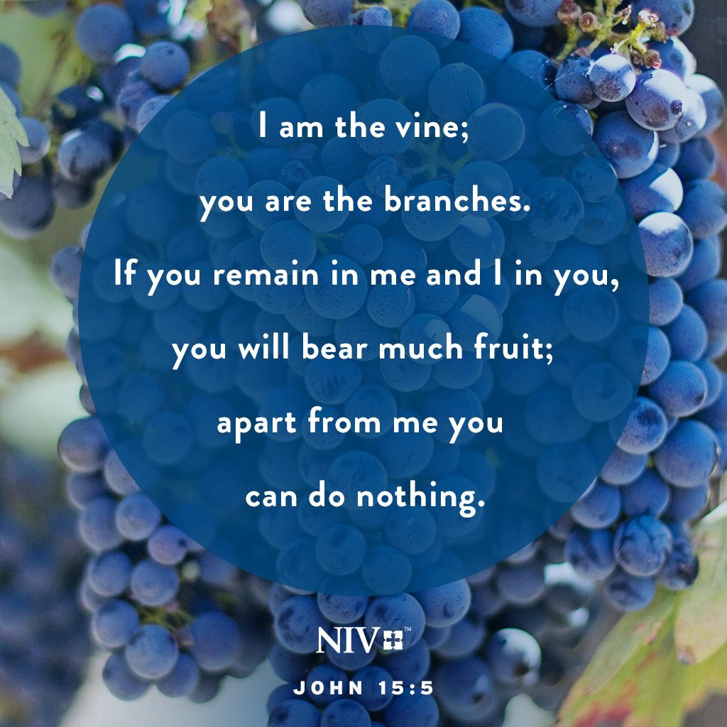 """The Bible On Twitter: """"""""I Am The Vine; You Are The"""