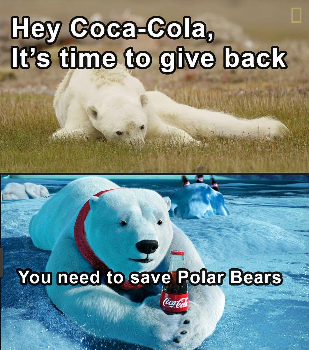 saving the polar bears essay Can ninjas save polar bears kids offer drawings, ideas (photos) for saving polar bears into the essay about how to save the arctic bears.