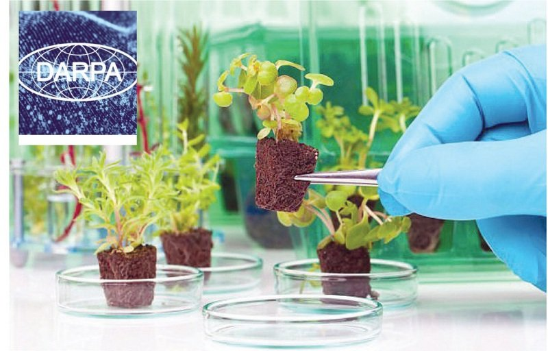 read a laboratory guide for cellular and molecular plant