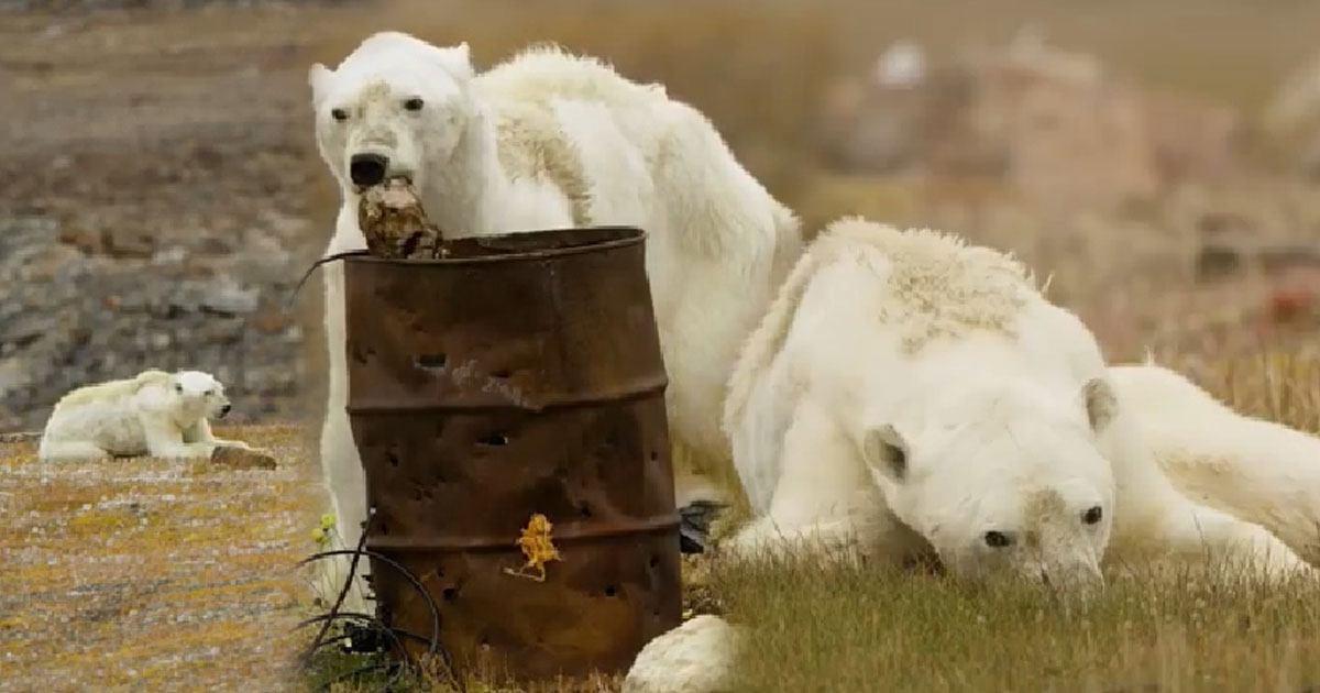 ทีมงานน้ำตาไหล ถ่ายคลิปหมีขั้วโลกอดอยาก-...