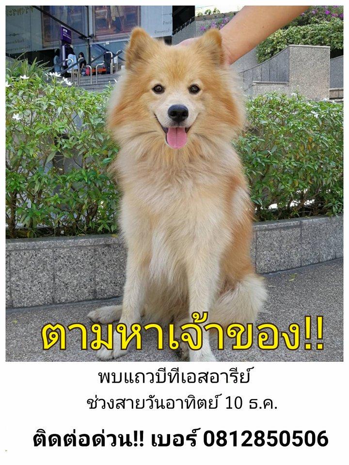 พลเมืองดี พบสุนัขพลัดหลง แถวบีทีเอสอารีย...