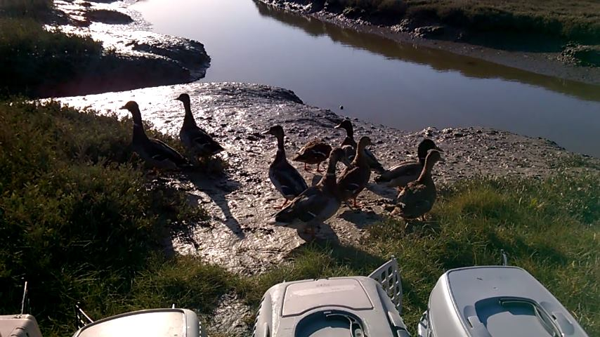 test Twitter Media - 10 of our Mallard ducks being released at a beautiful location on a beautiful sunny day! #wildlife https://t.co/hPe3VTuihl