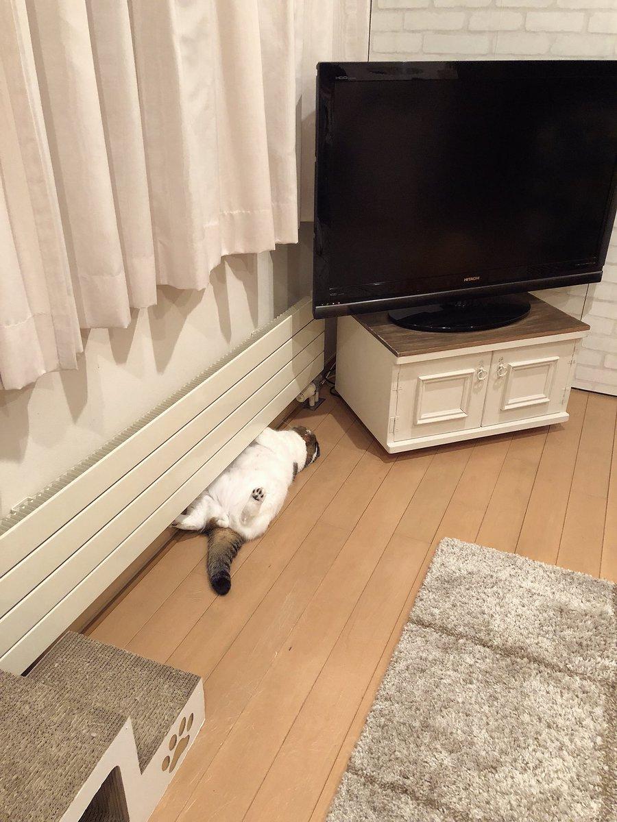 RT @akihimatandon11: パネルヒーターにひっ付いて暖をとる猫。 https://t.co/pVu0CzOsGt