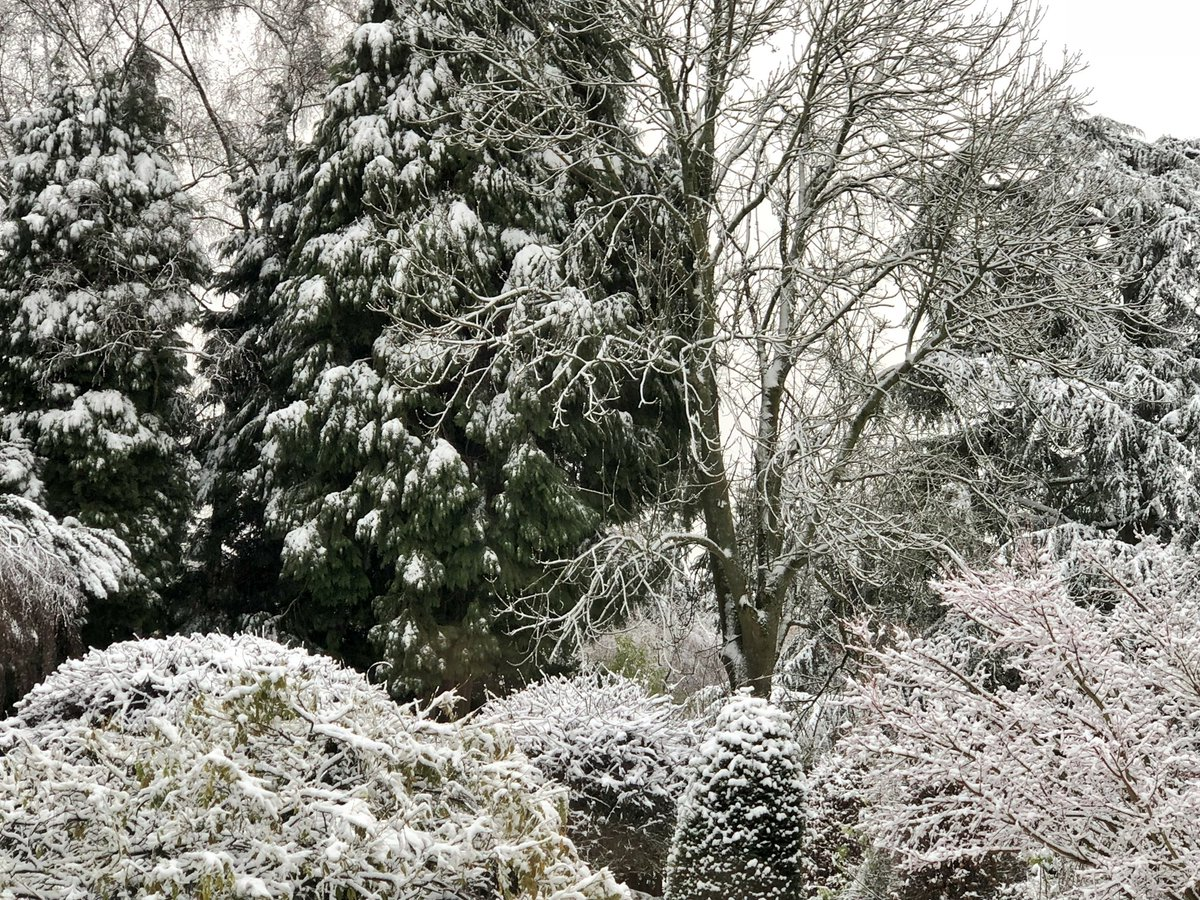 La neige tombe, reste et change nos paysages... #Bruxelles  #Uccle #météo 🇧🇪❄️⛄️