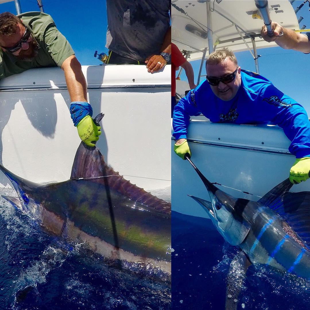 Exmouth, Aus - On Strike released a Blue Marlin and a Striped Marlin.