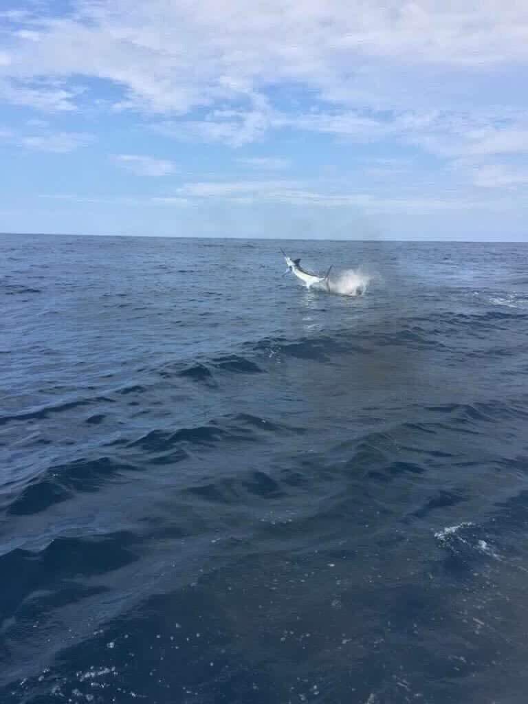 Quepos, CR - Caribsea released a Blue Marlin and a Sailfish.