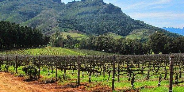 Stellenbosch, la región vinícola más gra...