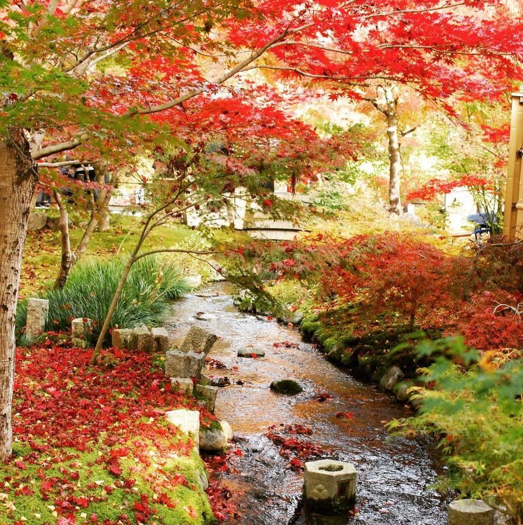 #kyoto #japan #japanese #garden #autumn #maple #stream #moss https://t.co/siOzHWQcRd https://t.co/RLBbno6WY5