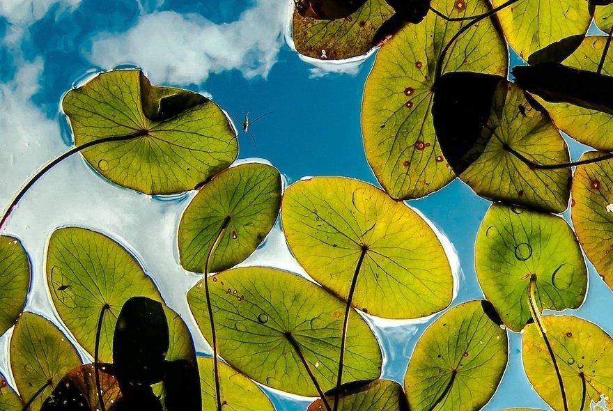 Pond world🐟 Canadian photographer Eiko J...