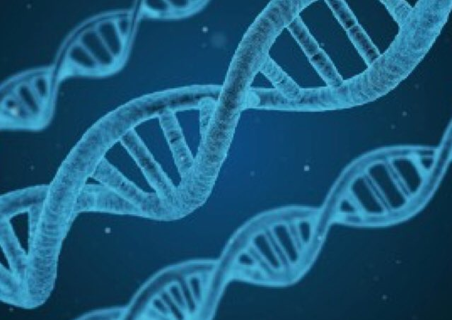 Unique study provides the first genetic...