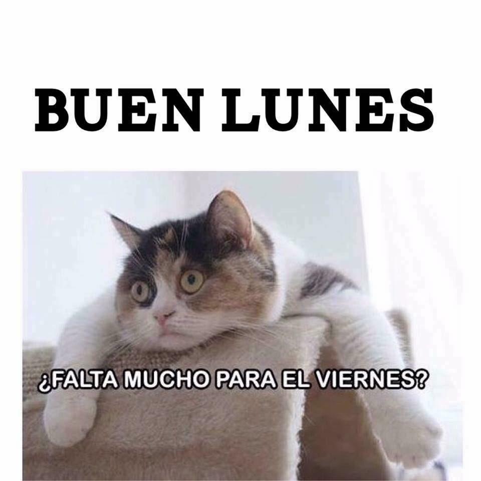 #BuenLunes https://t.co/Wdu6DsXArK