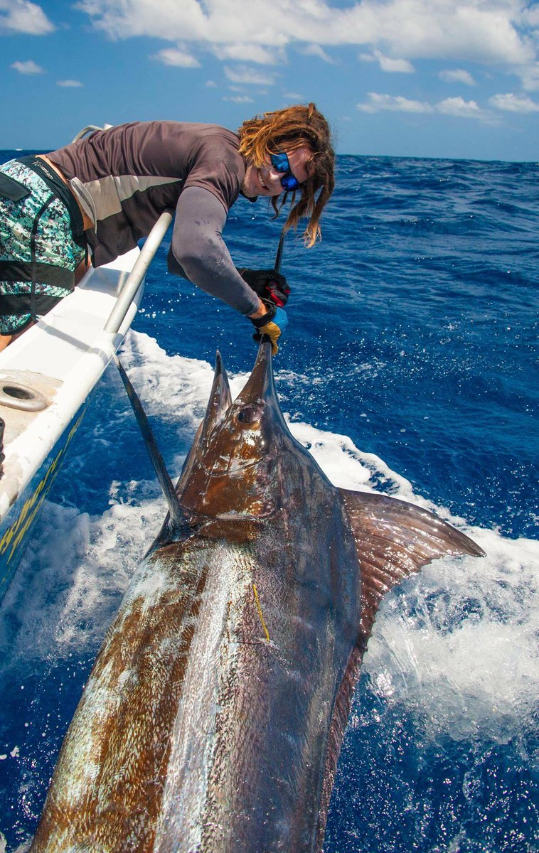 Exmouth, Aus - Buck Hunter went 2-4 on Blue Marlin, 0-1 on Sailfish and 0-1 on Striped Marlin.