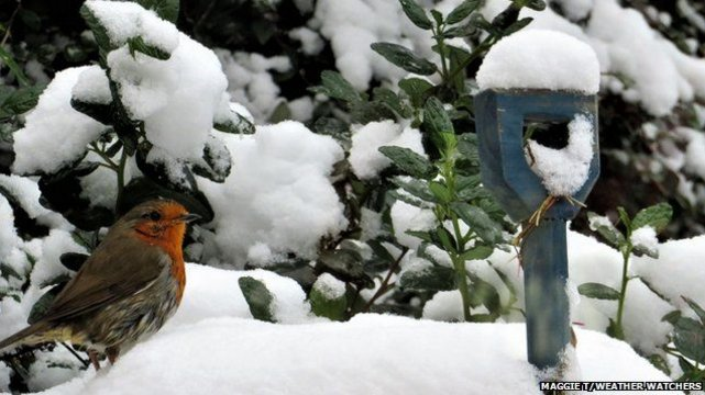 There are 421 Scottish words for snow. S...