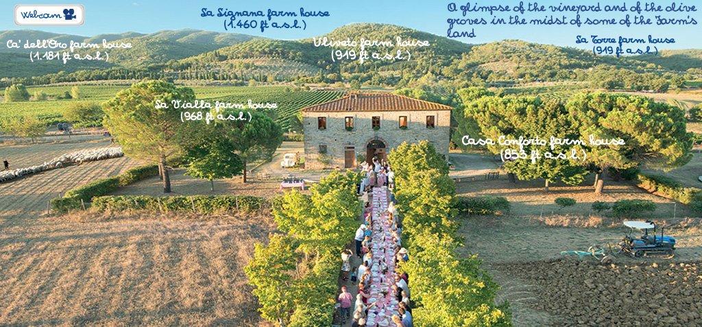 test Twitter Media - In the #biodynamic spotlight: Fattoria La Vialla, a 40-year old #tuscan estate with a unique product, OLIPHENOLIA https://t.co/4vJUGW1okO https://t.co/qKkz2KjCrQ