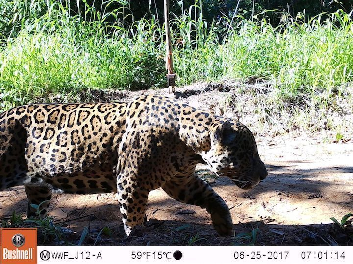 safari_central photo
