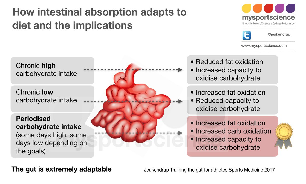 How intestinal absorption adapts to diet...