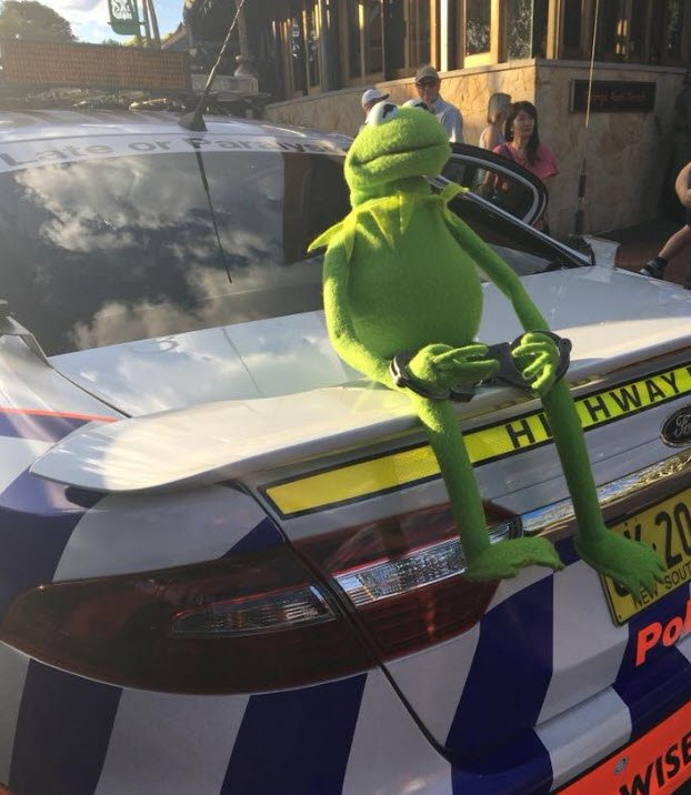 This muppet was busted kermitting traffi...