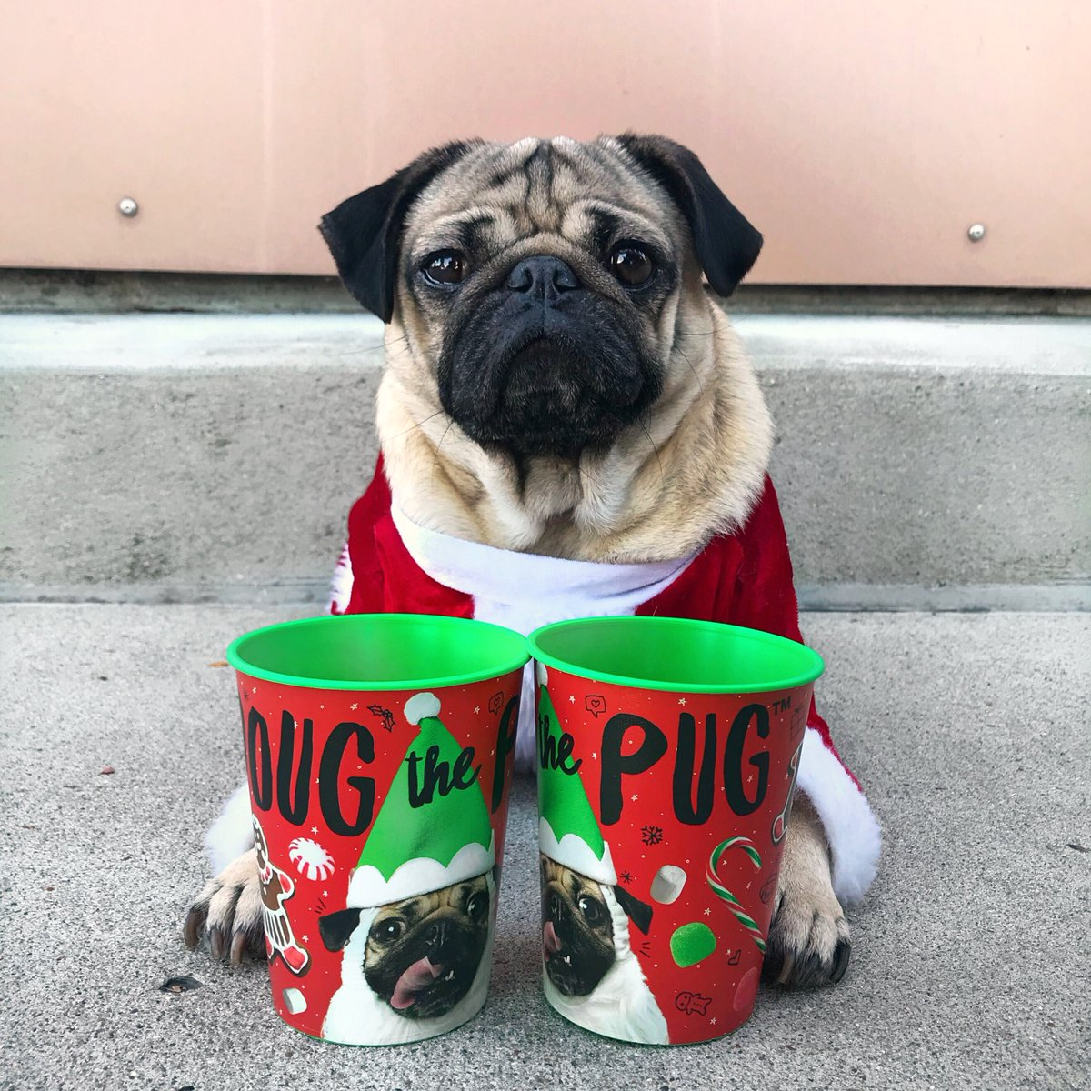 doug the pug on twitter the only cup u should be leaving milk in for santa dougs new christmas cups can be found at your local wal mart - Pug Christmas