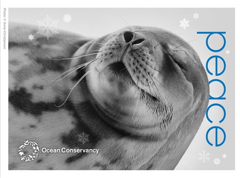 RT @OurOcean: #HappyHolidays from Ocean Conservancy https://t.co/cWVrom6dl7